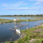 Lagune Karavasta