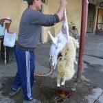 Der Metzger zieht dem Schaf das Fell über die Ohren